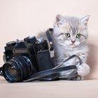 猫の動画・画像