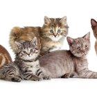猫種の情報