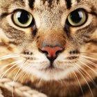 猫の基礎知識