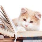 その他猫情報