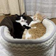 メル&ムン画像