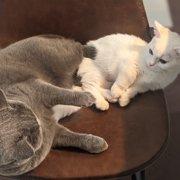 モンちゃん&リム画像