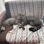 リン(左)コタロー(右)画像