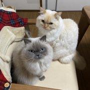 ロッキー&レニー画像