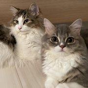 メル&マハロ画像
