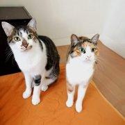 もりお&ナナ画像