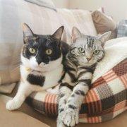 ベル&リサ画像