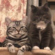 ティガー&coco画像