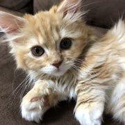 猫麻呂画像