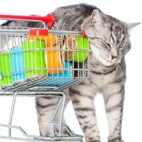 猫用品が買える場所