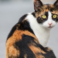 迷い猫に関して