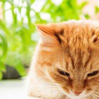 知恵(猫に安全な植物)
