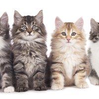 猫の選び方