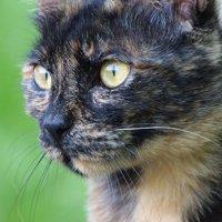 サビ猫の情報
