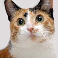 三毛猫の情報