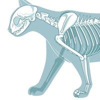 体(骨・筋肉)