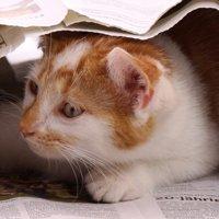 猫のニュース