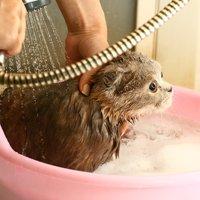 シャンプー・お風呂
