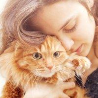 猫・飼い主の気持ち