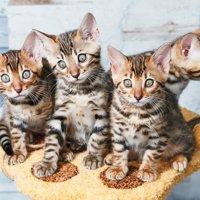 猫カフェ総合
