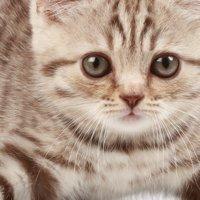 準備(子猫の選び方)