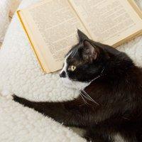 猫の種類の知識