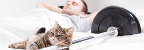 猫が飼い主を馬鹿にしてる時の仕草