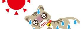 猫の熱中症の症状と応急処置の方法