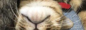 猫は『好きな人』と『嫌いな人』を区別している