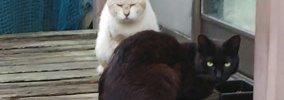 仲良しのボス猫が交通事故に…残され悲しむ猫の生活に嬉しい変化が!
