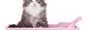 猫が急性腎不全になる症状や原因とその対処法
