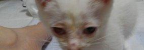 道路で保護した子猫~その後のお話