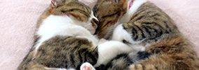 猫が幸せを感じた時にみせる10の仕草