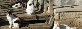 猫の集会が開かれる意味と参加条件