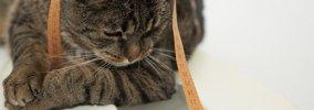 年齢別でみる猫の平均体重!太りすぎ、痩せすぎの対処法まで