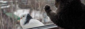 猫のクラッキングとは!「カカカ」という鳴き声と鳴く意味
