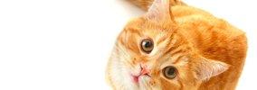 猫の寿命を短くする飼い主のNG行動