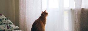愛情不足で育った猫の特徴3つ