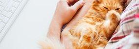 猫が嬉しい!と感じている時の4つの仕草