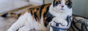 猫は『飼い主を忘れる』?忘れられてしまう3つのケースと絶対すべき予…