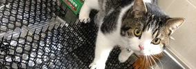 おもしろ猫の画像集19選!天然な姿にただ笑えてくる!