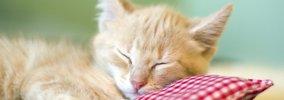 猫の睡眠時間はやっぱり長い?!一日どれくらい寝ているの?