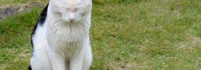 猫が反省している時のしぐさや鳴き声