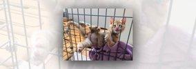 【悲報】ケージに挟まり動けない子猫の変顔が可愛すぎると話題