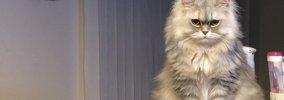 猫が飼い主の『愛を試している』時の行動5つ