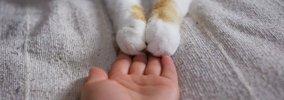 猫が飼い主の手を押さえてくる時の4つの意味