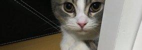 猫の謝罪に気づいてあげて!「ごめん」の仕草5つ