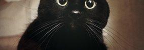 黒猫の写真を上手に撮る6つの方法