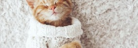 愛猫につけたい和風な名前まとめ