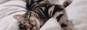 猫が飼い主の布団で寝ている8つの理由